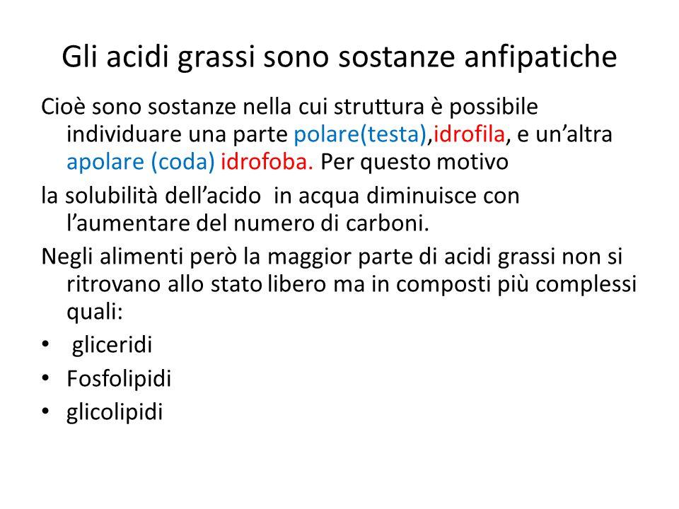 Gli acidi grassi sono sostanze anfipatiche Cioè sono sostanze nella cui struttura è possibile individuare una parte polare(testa),idrofila, e un'altra apolare (coda) idrofoba.