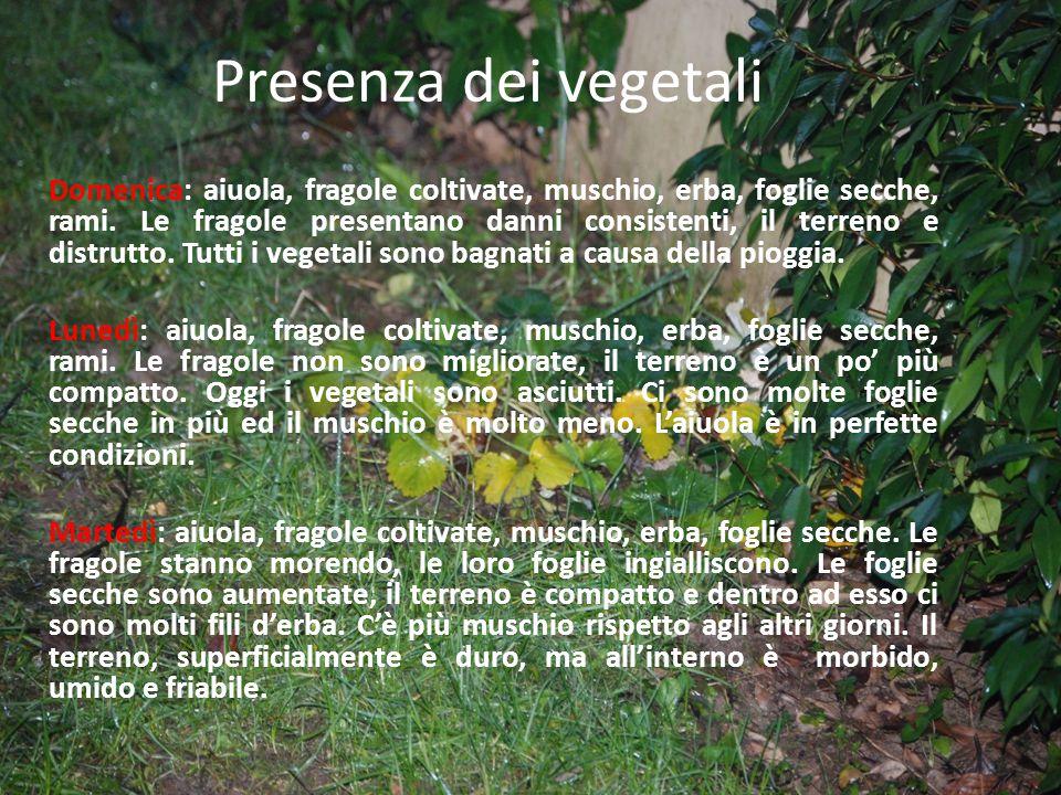 Presenza dei vegetali Domenica: aiuola, fragole coltivate, muschio, erba, foglie secche, rami.