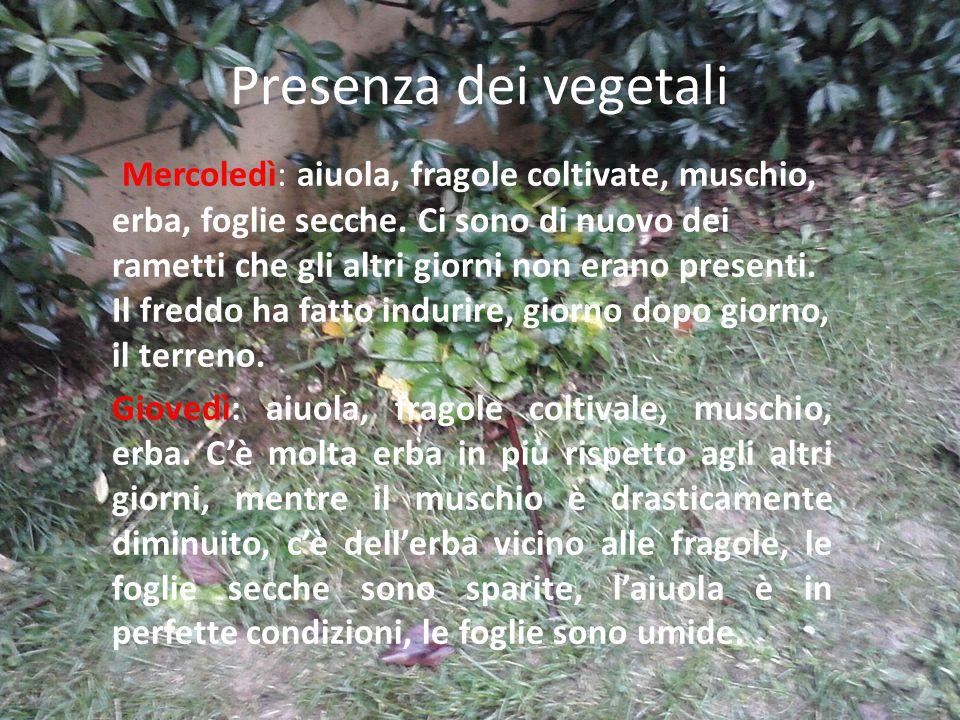 Presenza dei vegetali Mercoledì: aiuola, fragole coltivate, muschio, erba, foglie secche.