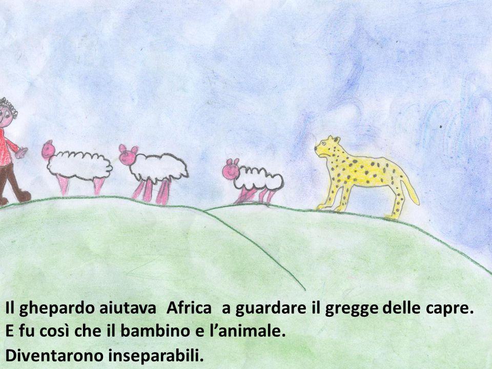 Il ghepardo aiutava Africa a guardare il gregge delle capre. E fu così che il bambino e l'animale. Diventarono inseparabili.