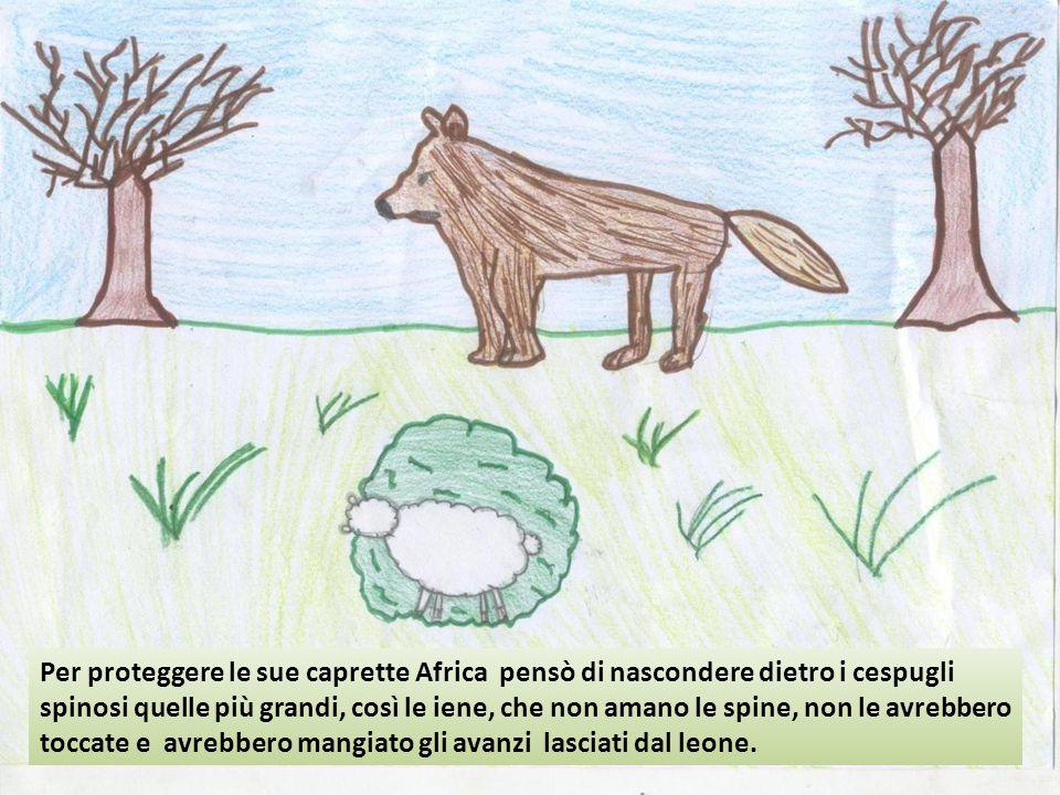 Per proteggere le sue caprette Africa pensò di nascondere dietro i cespugli spinosi quelle più grandi, così le iene, che non amano le spine, non le av