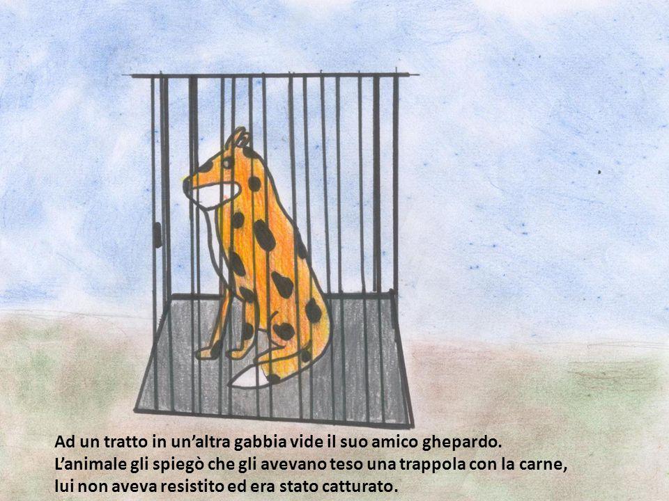 Ad un tratto in un'altra gabbia vide il suo amico ghepardo. L'animale gli spiegò che gli avevano teso una trappola con la carne, lui non aveva resisti