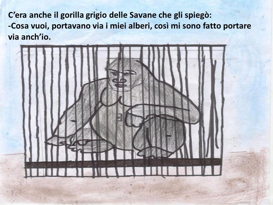 C'era anche il gorilla grigio delle Savane che gli spiegò: -Cosa vuoi, portavano via i miei alberi, così mi sono fatto portare via anch'io.