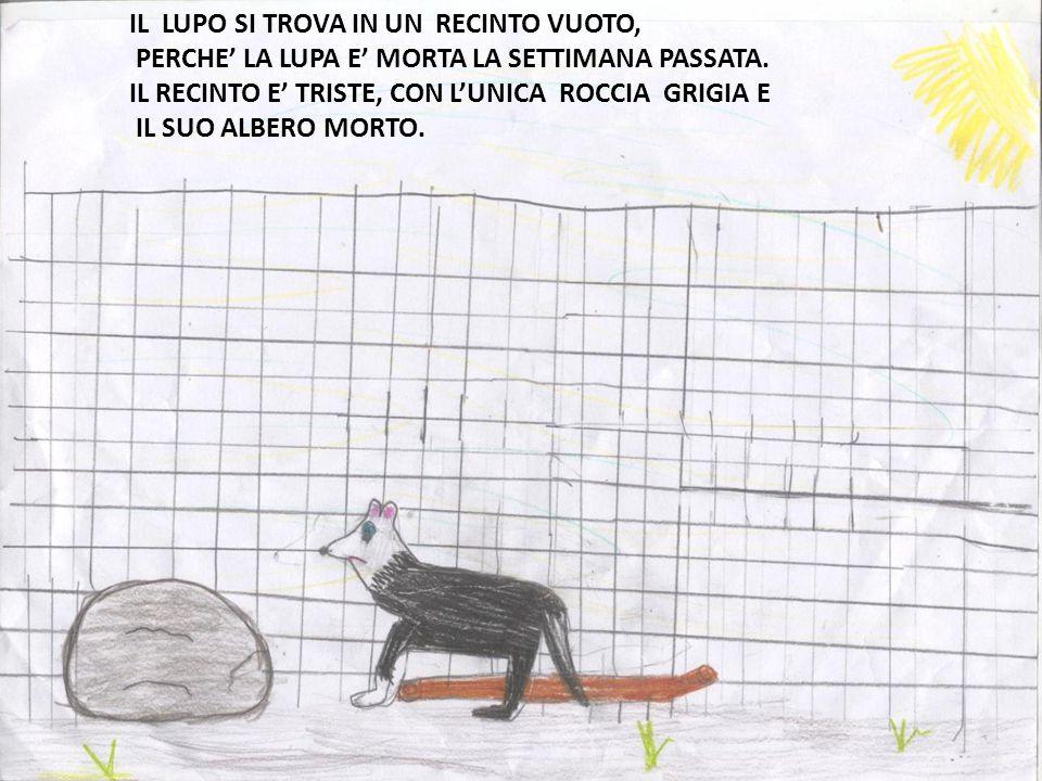 Dentro al recinto il lupo trotta da mattina a sera senza mai fermarsi, invece il bambino è sempre lì dall'altra parte del recinto immobile come una i.