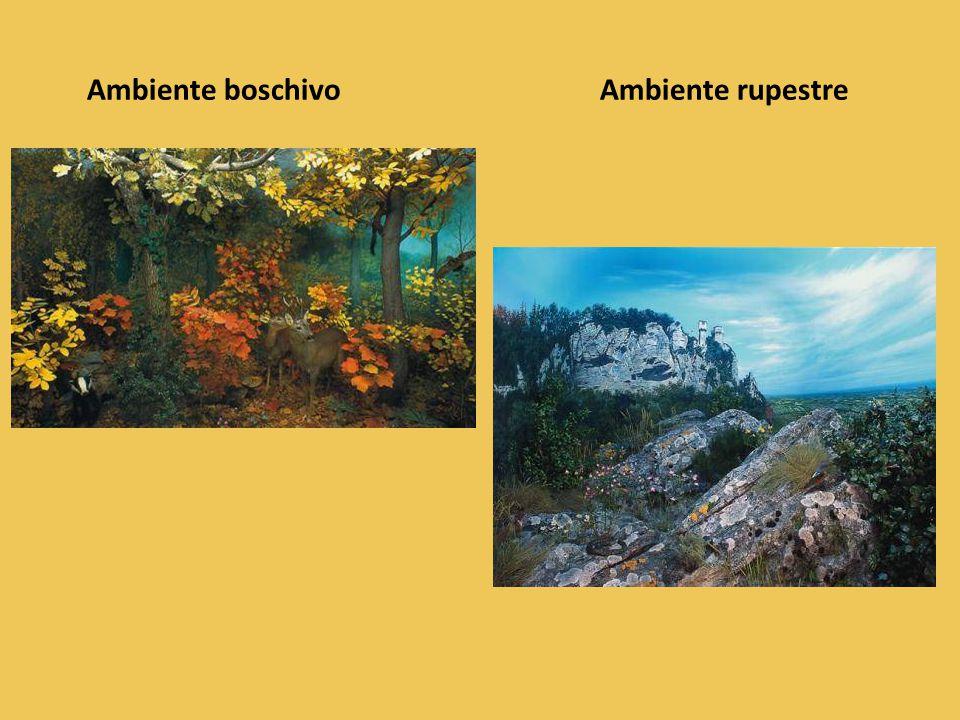 Ambiente boschivo Ambiente rupestre
