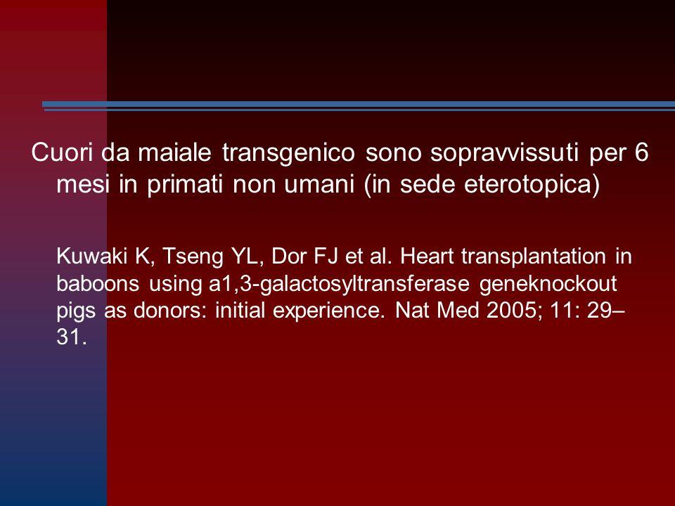 Cuori da maiale transgenico sono sopravvissuti per 6 mesi in primati non umani (in sede eterotopica) Kuwaki K, Tseng YL, Dor FJ et al. Heart transplan