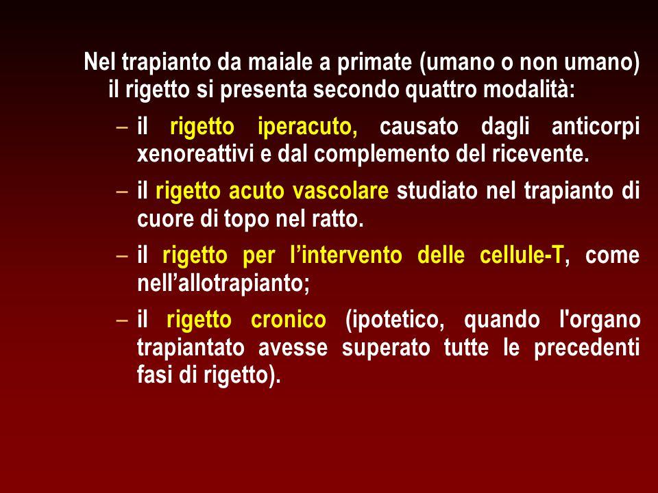 Nel trapianto da maiale a primate (umano o non umano) il rigetto si presenta secondo quattro modalità: – – il rigetto iperacuto, causato dagli anticor