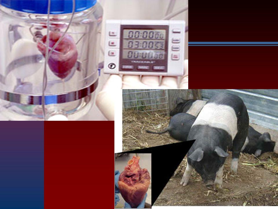 Cuori da maiale transgenico sono sopravvissuti per 6 mesi in primati non umani (in sede eterotopica) Kuwaki K, Tseng YL, Dor FJ et al.