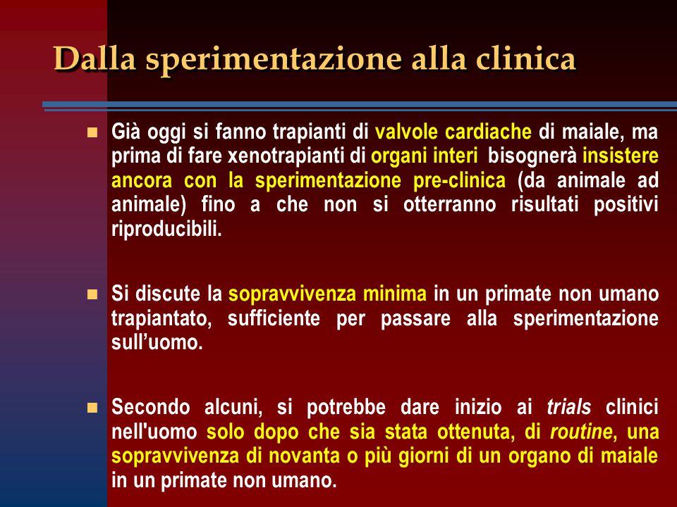 Dalla sperimentazione alla clinica n n Già oggi si fanno trapianti di valvole cardiache di maiale, ma prima di fare xenotrapianti di organi interi bis