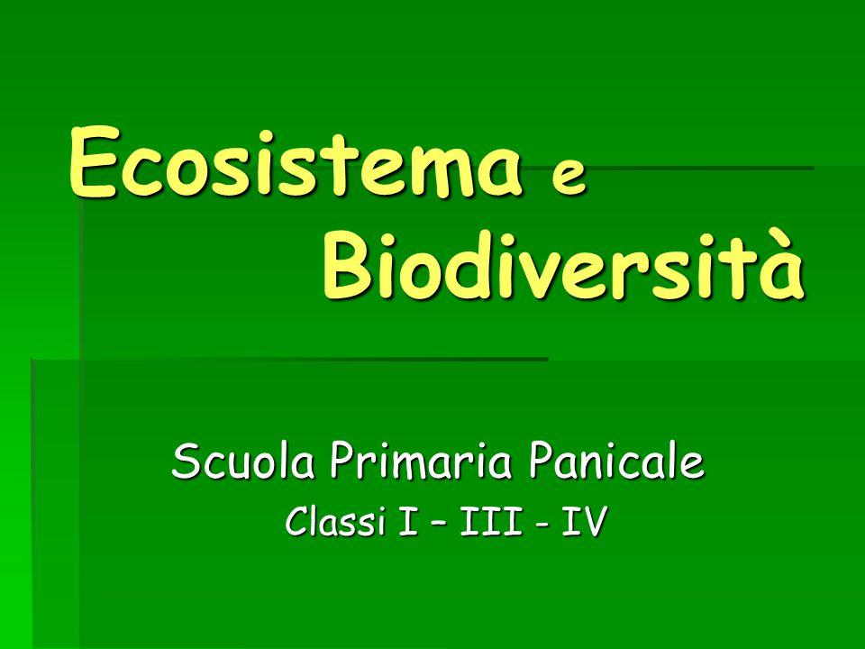 Ecosistema e Biodiversità Scuola Primaria Panicale Classi I – III - IV Classi I – III - IV