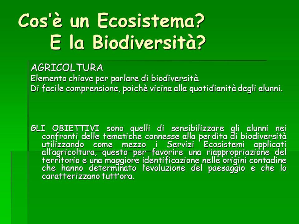 Cos'è un Ecosistema? E la Biodiversità? AGRICOLTURA Elemento chiave per parlare di biodiversità. Di facile comprensione, poichè vicina alla quotidiani