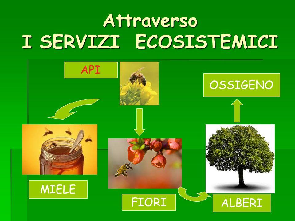 Attraverso I SERVIZI ECOSISTEMICI OSSIGENO MIELE FIORI API ALBERI