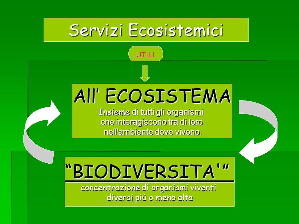 Servizi Ecosistemici All' ECOSISTEMA Insieme di tutti gli organismi che interagiscono tra di loro nell'ambiente dove vivono. nell'ambiente dove vivono