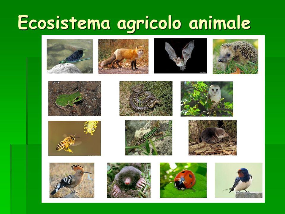 Ecosistema agricolo animale