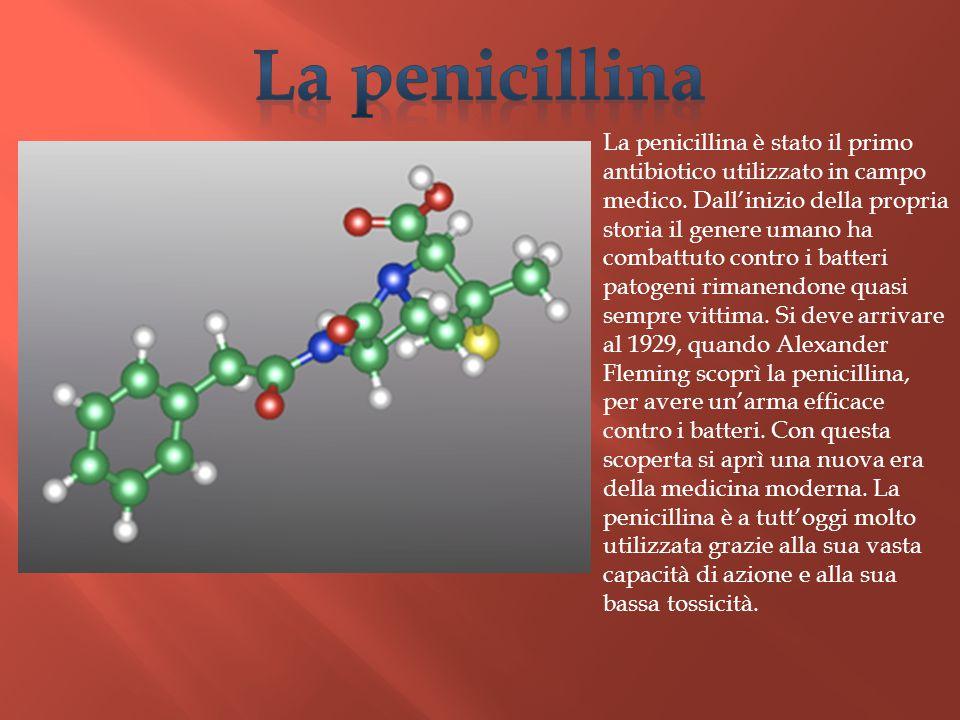 La penicillina è stato il primo antibiotico utilizzato in campo medico. Dall'inizio della propria storia il genere umano ha combattuto contro i batter