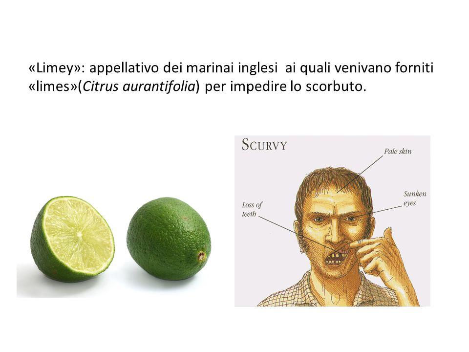 «Limey»: appellativo dei marinai inglesi ai quali venivano forniti «limes»(Citrus aurantifolia) per impedire lo scorbuto.