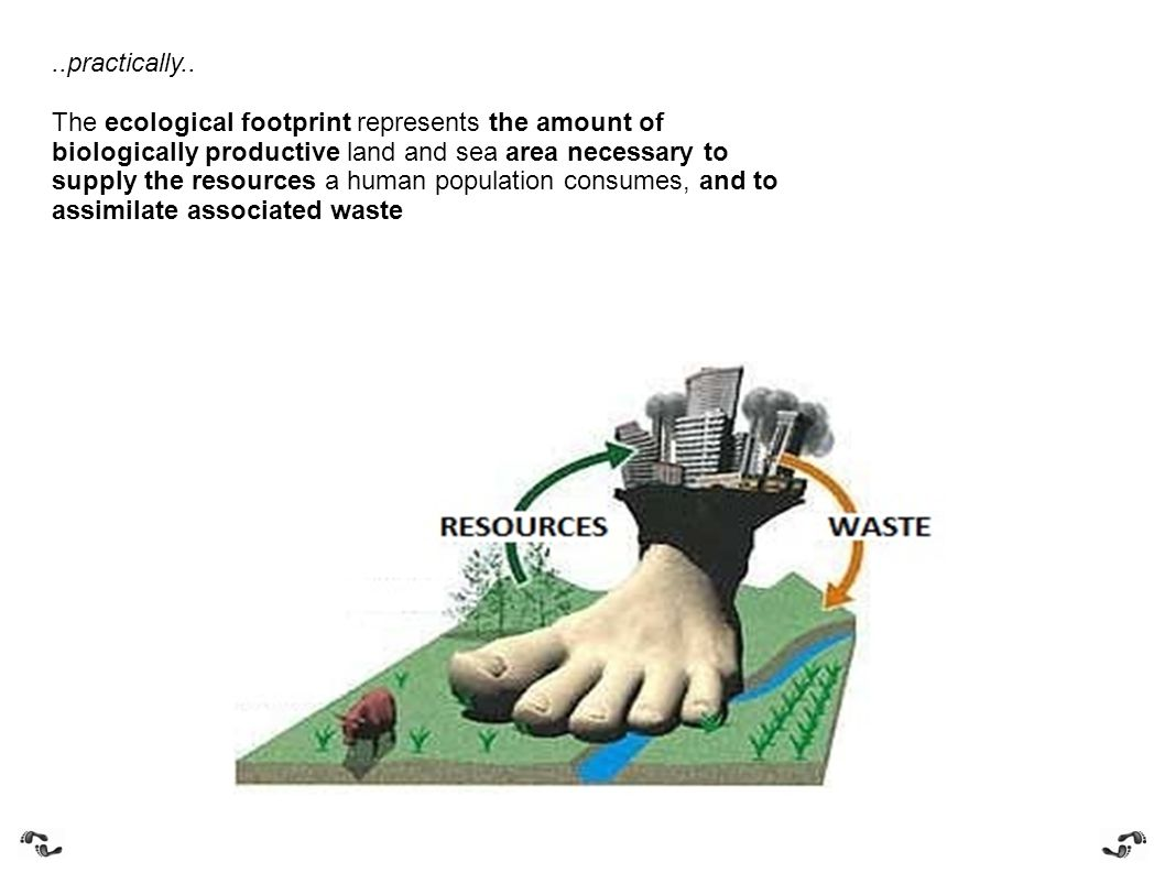 ..practically.. The ecological footprint represents the amount of biologically productive land and sea area necessary to supply the resources a human