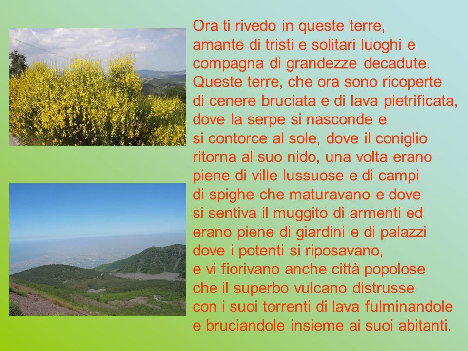 Qui sopra le falde del terribile e sterminatore monte Vesuvio, dove né fiori né alberi sopravvivono, tu, o profumata ginestra, che vivi bene anche nei deserti diffondi i tuoi cespugli tutt intorno.