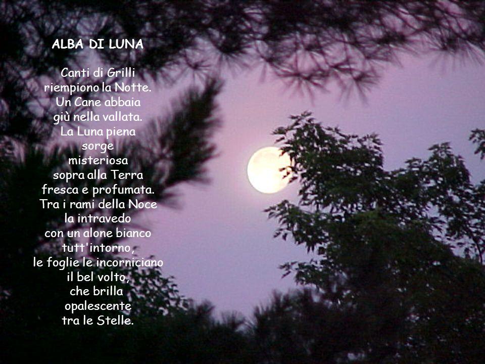 ALBA DI LUNA Canti di Grilli riempiono la Notte.Un Cane abbaia giù nella vallata.