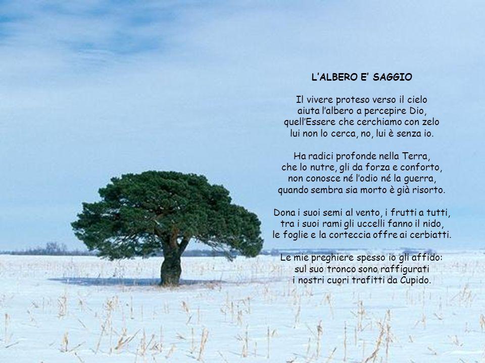 L'ALBERO E' SAGGIO Il vivere proteso verso il cielo aiuta l'albero a percepire Dio, quell'Essere che cerchiamo con zelo lui non lo cerca, no, lui è senza io.