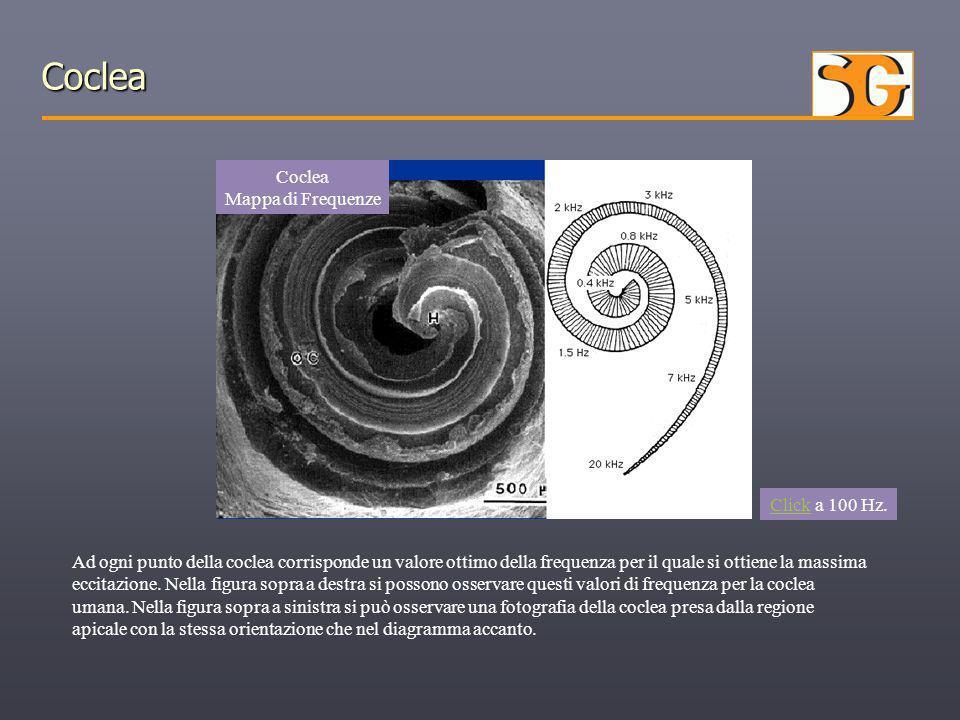 Coclea Coclea Mappa di Frequenze ClickClick a 100 Hz. Ad ogni punto della coclea corrisponde un valore ottimo della frequenza per il quale si ottiene