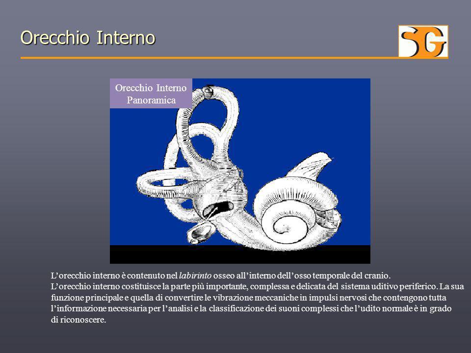 Orecchio Interno Panoramica L'orecchio interno è contenuto nel labirinto osseo all'interno dell'osso temporale del cranio. L'orecchio interno costitui