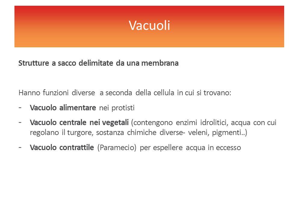 Strutture a sacco delimitate da una membrana Hanno funzioni diverse a seconda della cellula in cui si trovano: - Vacuolo alimentare nei protisti - Vac