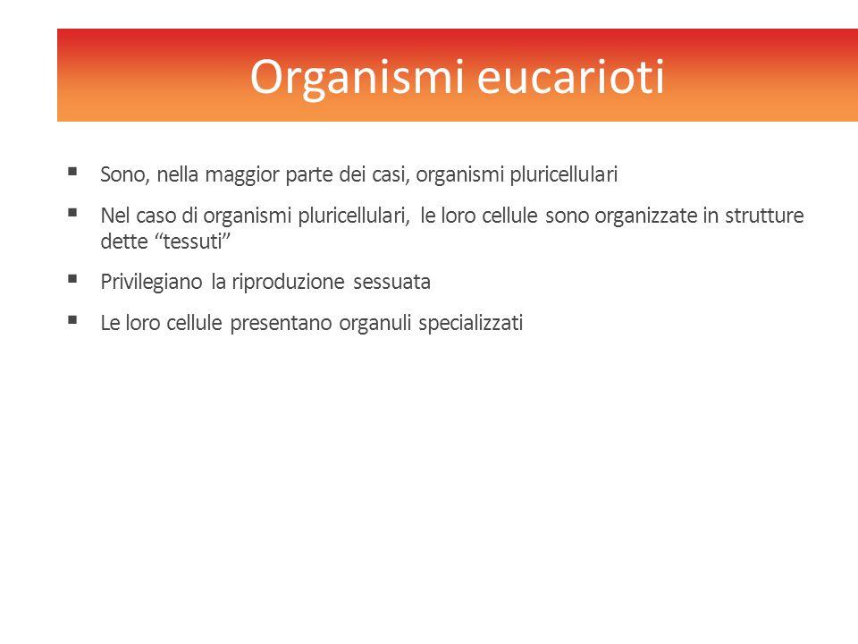  Sono, nella maggior parte dei casi, organismi pluricellulari  Nel caso di organismi pluricellulari, le loro cellule sono organizzate in strutture d