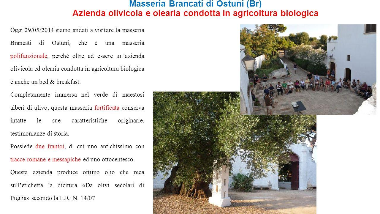 Masseria Brancati di Ostuni (Br) Azienda olivicola e olearia condotta in agricoltura biologica Oggi 29/05/2014 siamo andati a visitare la masseria Bra