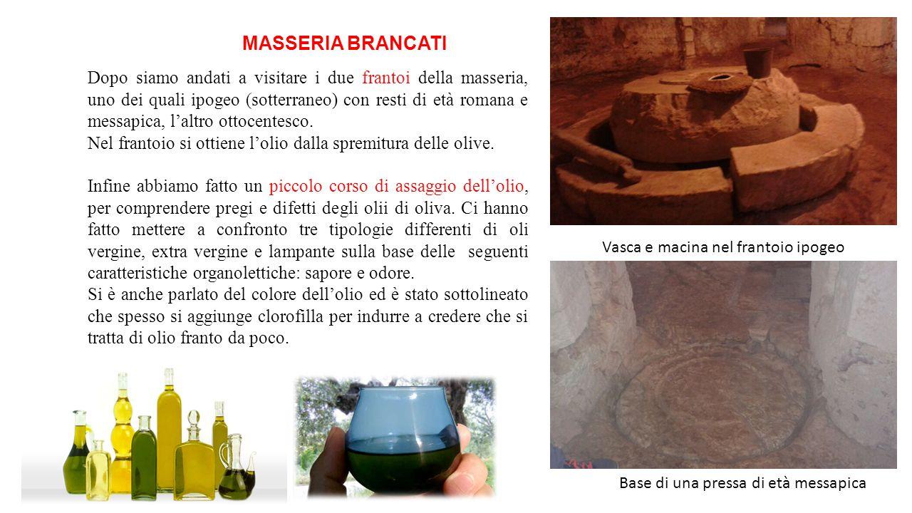MASSERIA BRANCATI Dopo siamo andati a visitare i due frantoi della masseria, uno dei quali ipogeo (sotterraneo) con resti di età romana e messapica, l