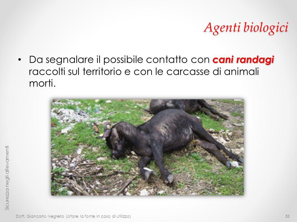 Agenti biologici cani randagi Da segnalare il possibile contatto con cani randagi raccolti sul territorio e con le carcasse di animali morti. Dott. Gi