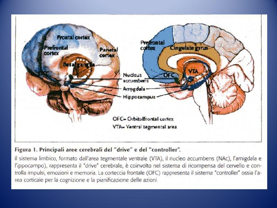 Sindrome I-RISA
