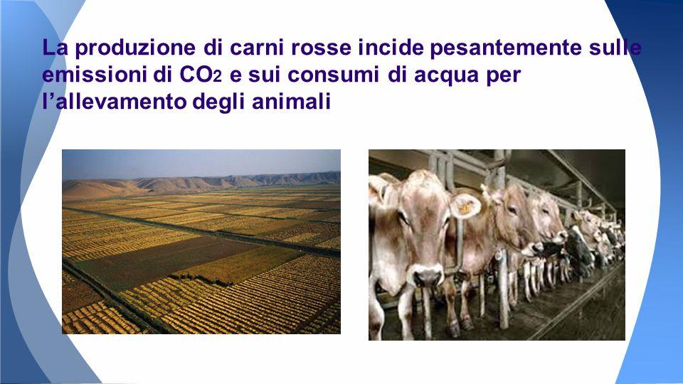 La produzione di carni rosse incide pesantemente sulle emissioni di CO 2 e sui consumi di acqua per l'allevamento degli animali