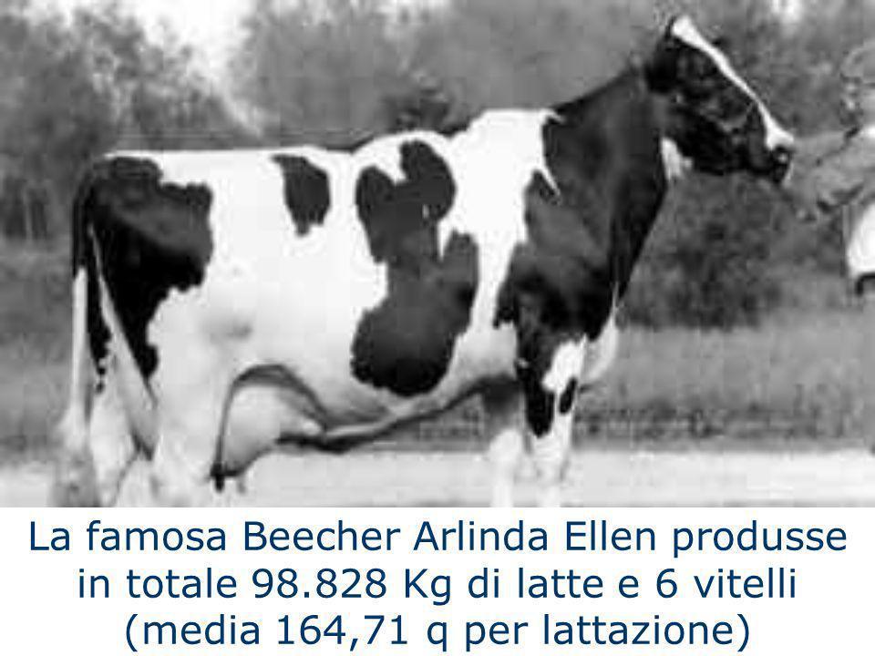 La famosa Beecher Arlinda Ellen produsse in totale 98.828 Kg di latte e 6 vitelli (media 164,71 q per lattazione)