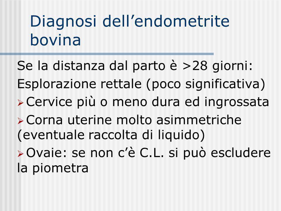 Diagnosi dell'endometrite bovina Se la distanza dal parto è >28 giorni: Esplorazione rettale (poco significativa)  Cervice più o meno dura ed ingross