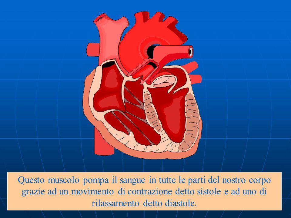Il cuore si trova nel torace tra i due polmoni e le sue pareti sono formate dal miocardio, un tessuto muscolare speciale .