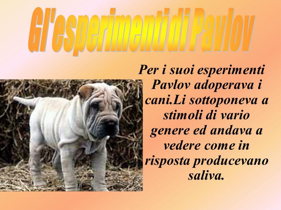 Per i suoi esperimenti Pavlov adoperava i cani.Li sottoponeva a stimoli di vario genere ed andava a vedere come in risposta producevano saliva.