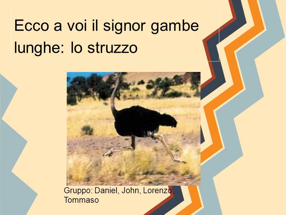 Ecco a voi il signor gambe lunghe: lo struzzo Gruppo: Daniel, John, Lorenzo, Tommaso