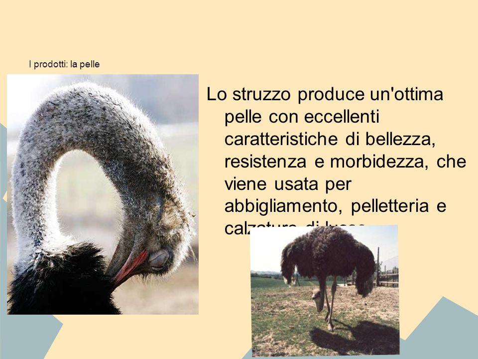 I prodotti: la pelle Lo struzzo produce un'ottima pelle con eccellenti caratteristiche di bellezza, resistenza e morbidezza, che viene usata per abbig