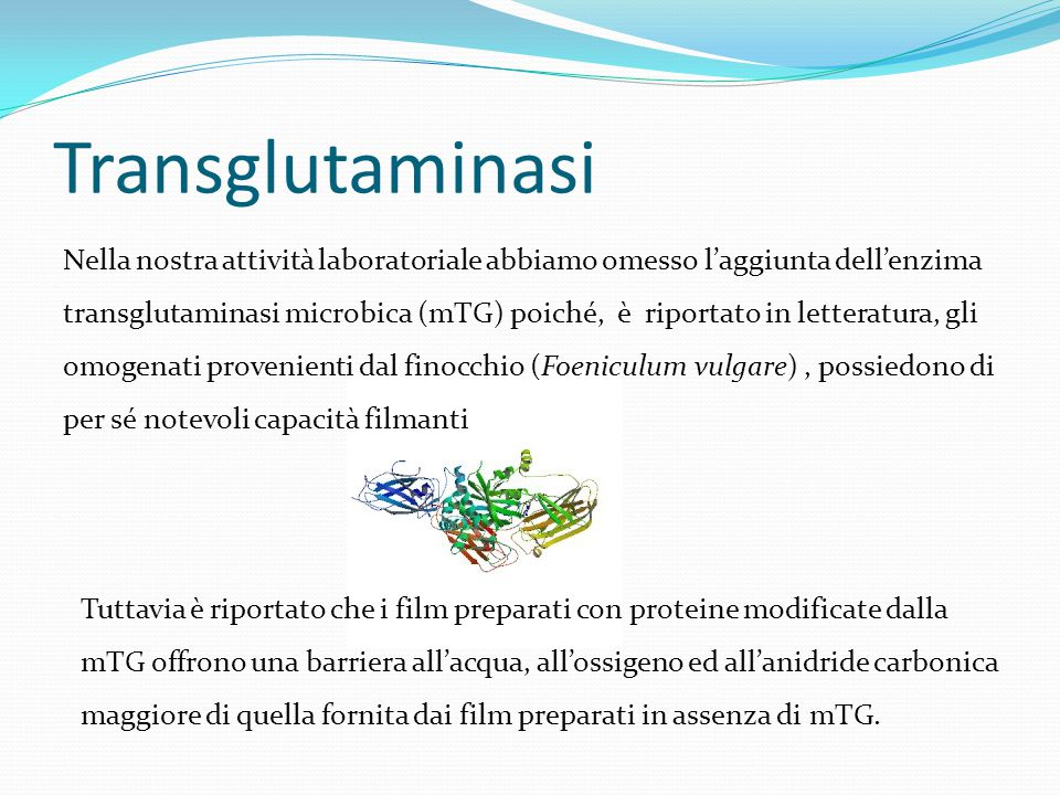 Transglutaminasi Nella nostra attività laboratoriale abbiamo omesso l'aggiunta dell'enzima transglutaminasi microbica (mTG) poiché, è riportato in letteratura, gli omogenati provenienti dal finocchio (Foeniculum vulgare), possiedono di per sé notevoli capacità filmanti Tuttavia è riportato che i film preparati con proteine modificate dalla mTG offrono una barriera all'acqua, all'ossigeno ed all'anidride carbonica maggiore di quella fornita dai film preparati in assenza di mTG.