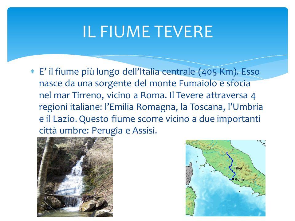  E' il fiume più lungo dell'Italia centrale (405 Km). Esso nasce da una sorgente del monte Fumaiolo e sfocia nel mar Tirreno, vicino a Roma. Il Tever