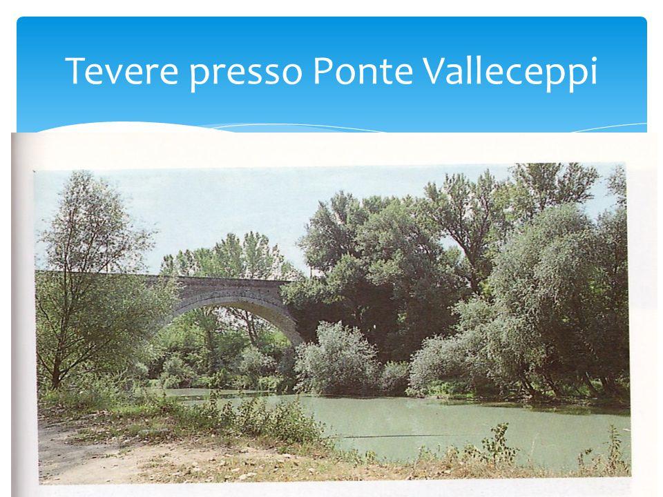 Tevere presso Ponte Valleceppi