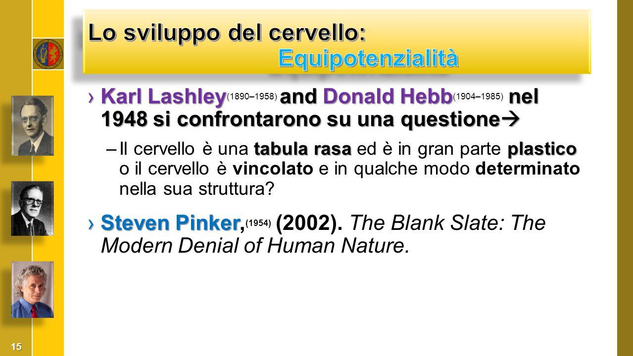 ›Karl Lashleyand Donald Hebb nel 1948 si confrontarono su una questione  ›Karl Lashley (1890–1958) and Donald Hebb (1904–1985) nel 1948 si confrontar