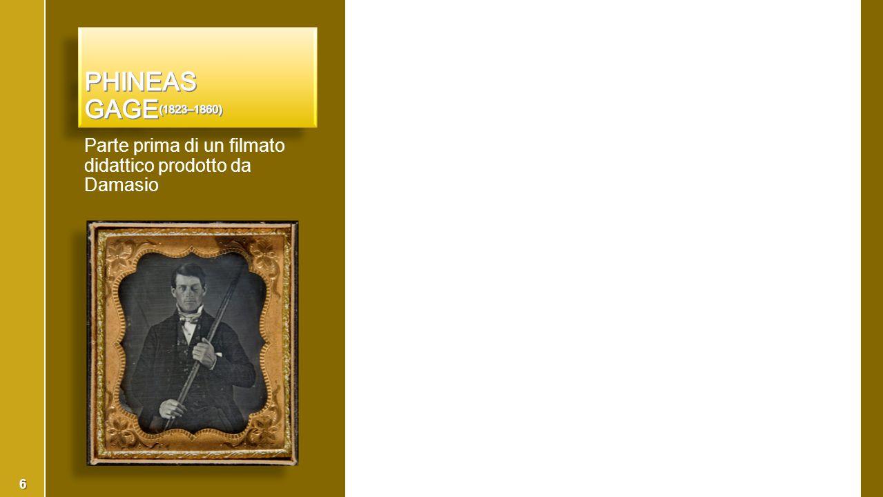 ›Donald Hebb, (1904-1985) segnò la fine del behaviorism ›Donald Hebb, (1904-1985) 1949, The Organization of Behavior: A Neuropsychological Theory, segnò la fine del behaviorism  Ivan Pavlov (1849-1936, Nobel 1904) ›Respinse le idee di Ivan Pavlov (1849-1936, Nobel 1904), il grande fisiologo russo, che aveva visto il cervello come un unico grande arco riflesso.