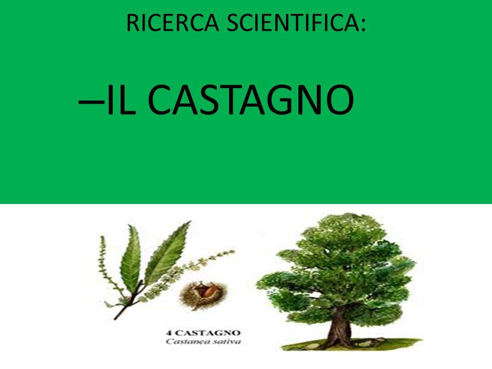 RICERCA SCIENTIFICA: – IL CASTAGNO