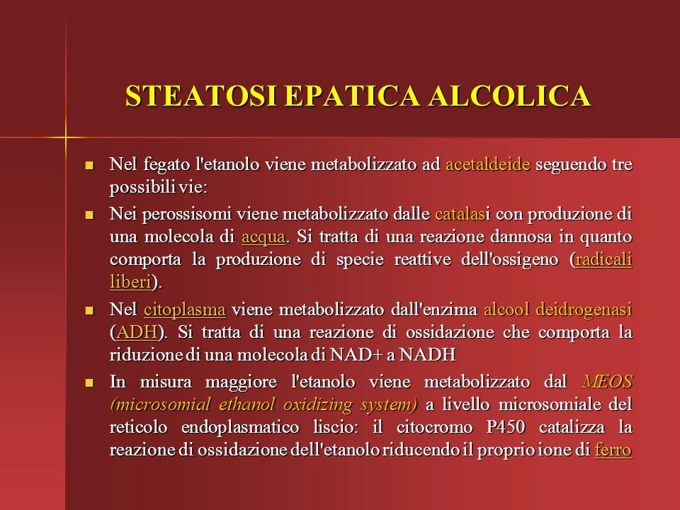 STEATOSI EPATICA ALCOLICA Nel fegato l'etanolo viene metabolizzato ad acetaldeide seguendo tre possibili vie: Nel fegato l'etanolo viene metabolizzato