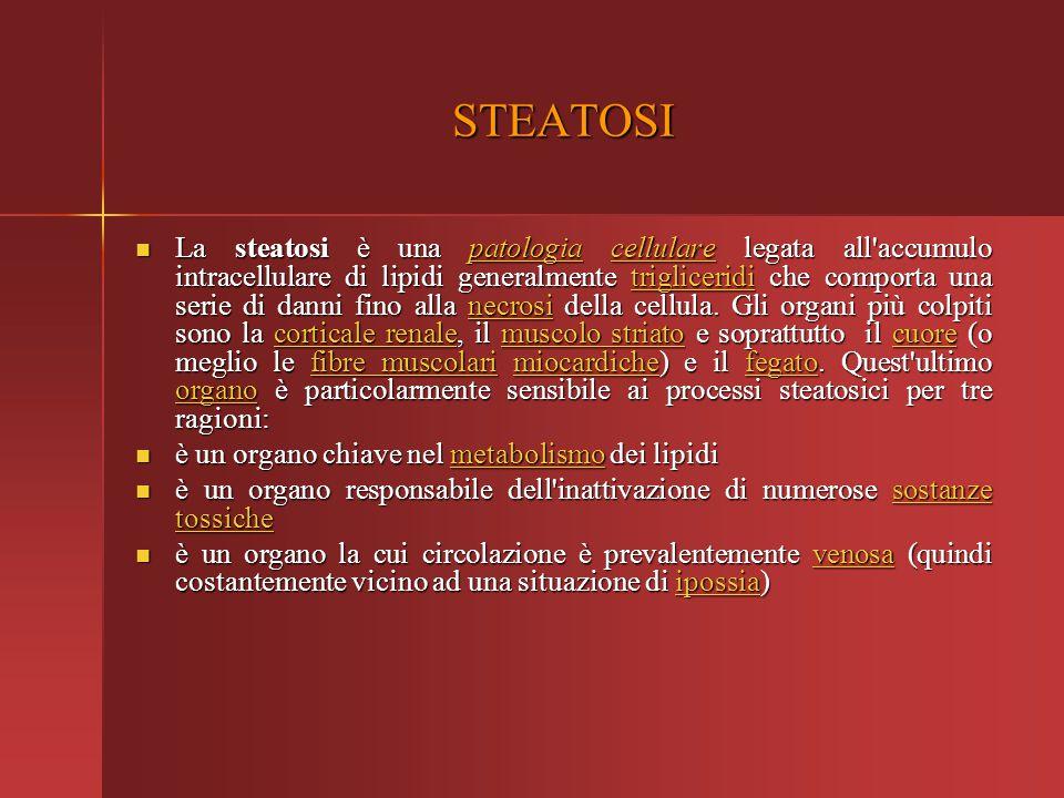 STEATOSI La steatosi è una patologia cellulare legata all'accumulo intracellulare di lipidi generalmente trigliceridi che comporta una serie di danni