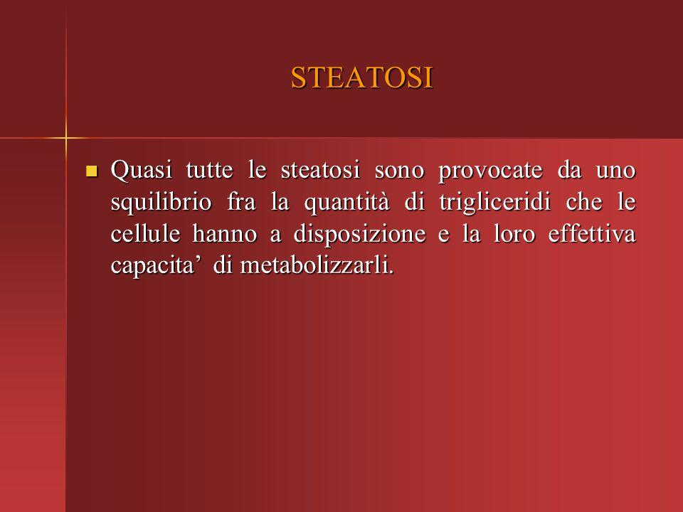 STEATOSI Quasi tutte le steatosi sono provocate da uno squilibrio fra la quantità di trigliceridi che le cellule hanno a disposizione e la loro effett