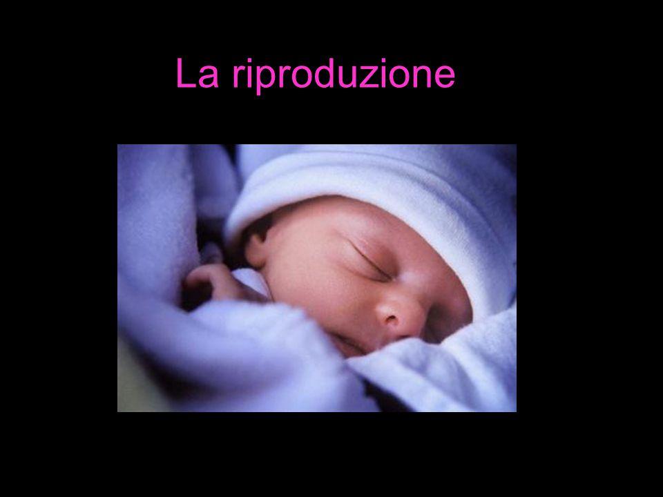 Gli apparati riproduttori Come sappiamo nell'uomo la riproduzione è sessuata, a fecondazione e sviluppo interno nel corpo della madre.
