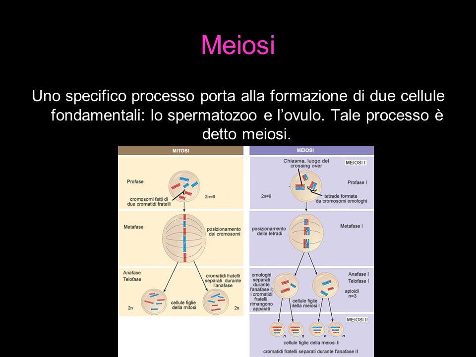 Ciclo ovarico e fecondazione La formazione degli spermatozoi nell' uomo inizia a circa 14 anni e continua per tutta la vita,mentre nella donna inizia a circa 13 anni e termina verso i 50 anni; in questo periodo si dice che la donna è in menopausa.